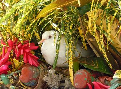 Photograph - Dove In Jamaica by Karen J Shine