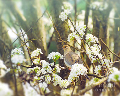 Photograph - Dove In The Blossoms by Kerri Farley