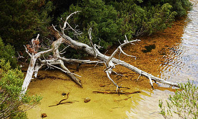 Photograph - Dove Lake Bleached Tree by Lexa Harpell