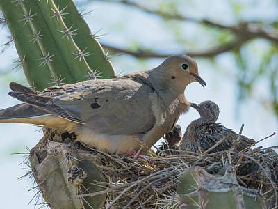 Photograph - Dove Motherhood 0586-051318-1cr by Tam Ryan
