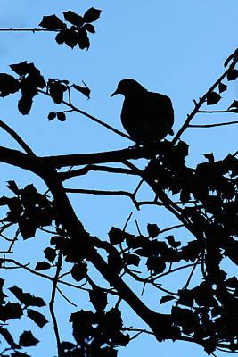 Dove Photograph - Dove On A Limb  by Jennifer Robin