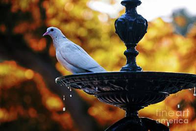Photograph - Dove On Fountain Genovese Park Cadiz Spain by Pablo Avanzini