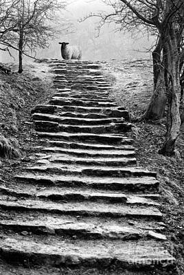 Animals Photos - Dovedale steps by John Edwards