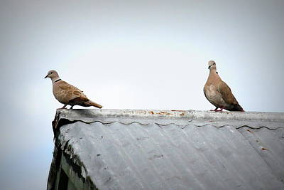Photograph - Doves by Beth Vincent