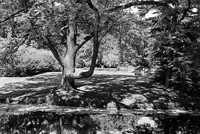 Photograph - Dow Gardens 6 Bw by Mary Bedy