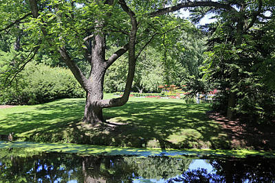 Photograph - Dow Gardens 6 by Mary Bedy