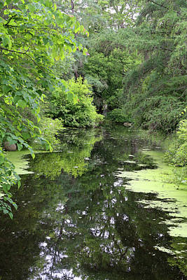 Photograph - Dow Gardens Pond With Reflection 2018 by Mary Bedy