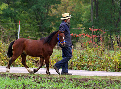 Amish Farmer Photograph - Down A Country Road by Linda Mishler