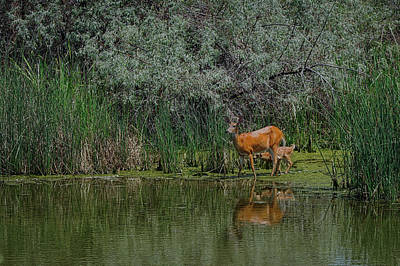 Photograph - Down By The Water 2 by Ernie Echols