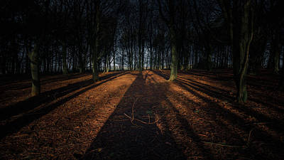 Birmingham Photograph - Down In The Woods by Chris Fletcher