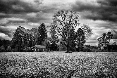Photograph - Down On The Farm by Steven Clark