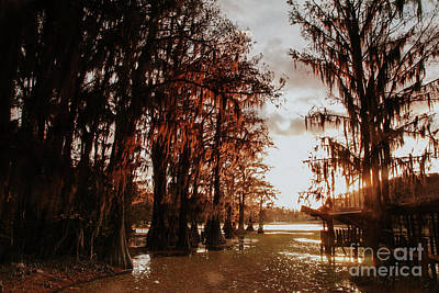 Photograph - Down Route Of The Cypress by Iris Greenwell