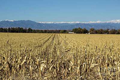 Photograph - Down The Corn Rows by Steven Parker