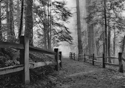 Photograph - Down The Misty Path by Don Schwartz