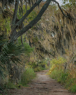 Photograph - Down The Path by Jane Luxton