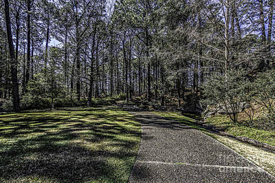 Photograph - Down The Path by Ken Frischkorn