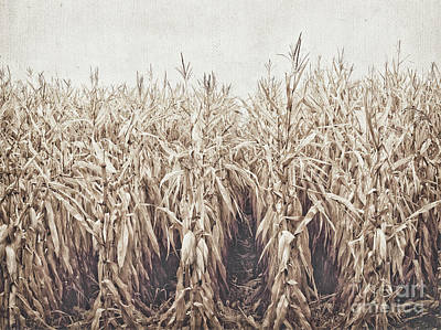 Cornfield Photograph - Down The Row 2 by Alison Sherrow I AgedPage