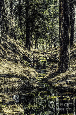 Photograph - Down The Stream by Ken Frischkorn
