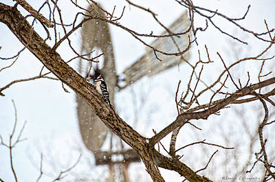 Photograph - Downey Woodpecker And Windmill by David Arment