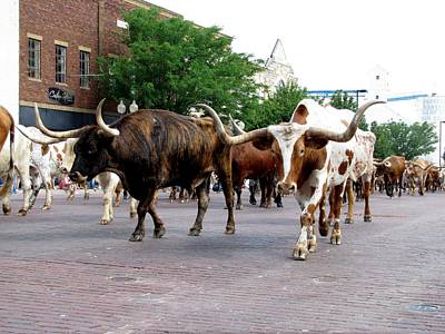 Cattle Drive Photograph - Downtown Cattle Drive by Keith Stokes