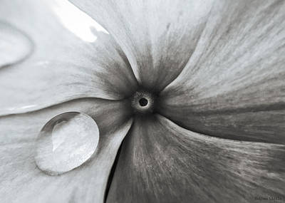 Photograph - Downward Spiral by Nathan Little
