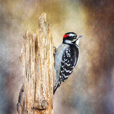 Small Woodpecker Photograph - Downy At Dusk by Bill Tiepelman