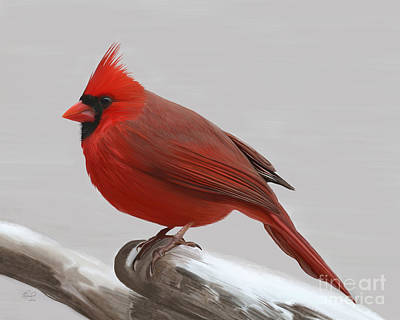 Painting - Downy Winter Male by Rand Herron