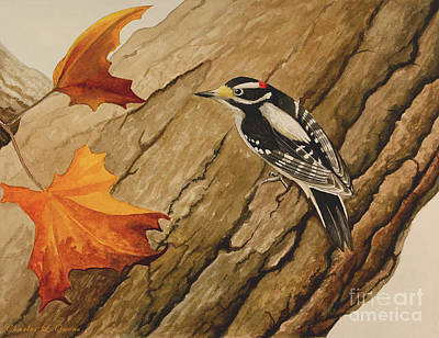 Painting - Downy Woodpecker by Charles Owens