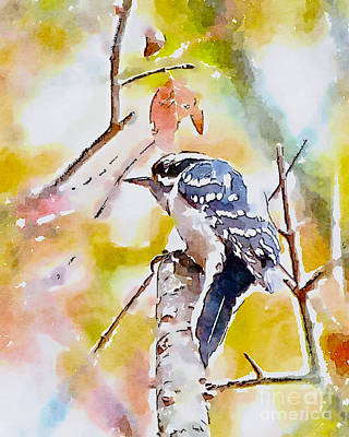 Photograph - Downy Woodpecker - Digital Watercolor by Kerri Farley