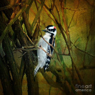 Photograph - Downy Woodpecker by Judy Palkimas
