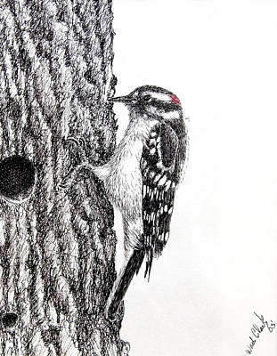 Drawing - Downy Woodpecker by Wade Clark