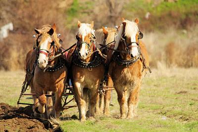 On Trend Breakfast - Draft horses by Jeff Swan