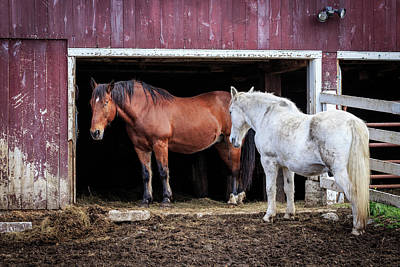 Photograph - Draft Horses by Jim Gillen