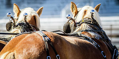 Photograph - Draft Horses Ready by Dawn Romine