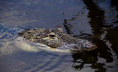 Photograph - Dragon And Gator by Debbie Oppermann