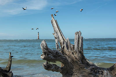 Photograph - Dragon Driftwood by Ed Waldrop