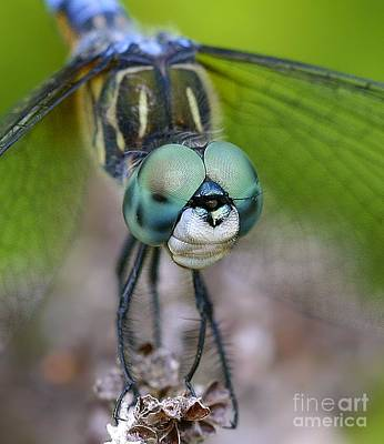 Photograph - Bug-eyed by Debbie Stahre