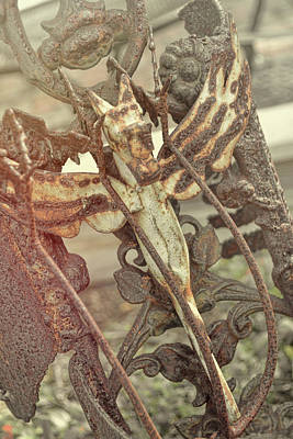 Photograph - Dragon Flies by Jamart Photography