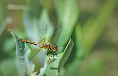 Metal Dragonfly Photograph - Dragon Fly 1 by Rick Mosher