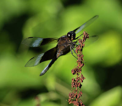 Photograph - Dragon Fly 2 by Buddy Scott