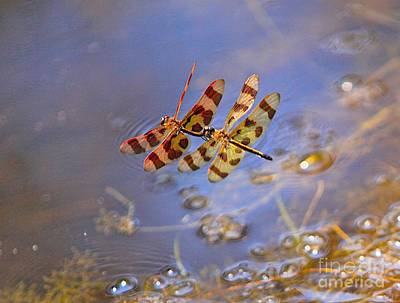 Red White And Blue Mixed Media - Dragon Fly-2 by Robert Pearson