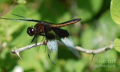 Photograph - Dragon Fly by David Lane