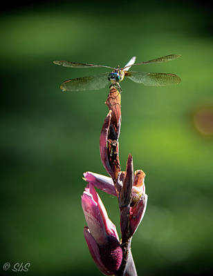 Photograph - Dragon Fly Dryer by Stefanie Silva