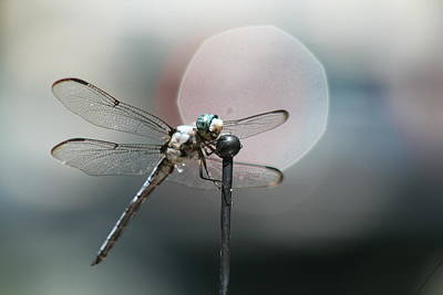 Photograph - Dragon Fly On Antenna by Suzanne L Kish