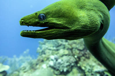 Underwater Photograph - Dragon by Jim Murphy