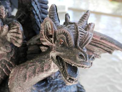 Photograph - Dragon On The Loose by Belinda Lee
