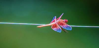 Photograph - Dragon Resting by Kenneth James