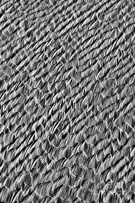 Wave Pattern Photograph - Dragon Scales by Tim Gainey