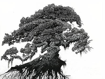 Drawing - Dragon Tree by Stanley Morrison