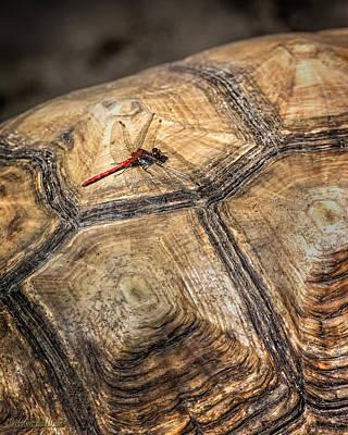 Photograph - Dragon Turtle by LeeAnn McLaneGoetz McLaneGoetzStudioLLCcom
